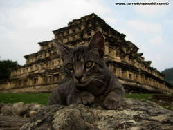 Kitty, le chat aventurier