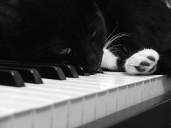Nora, le chat pianiste