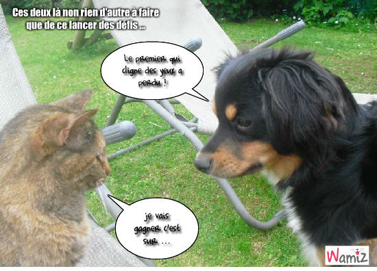 photo drole chien et chat