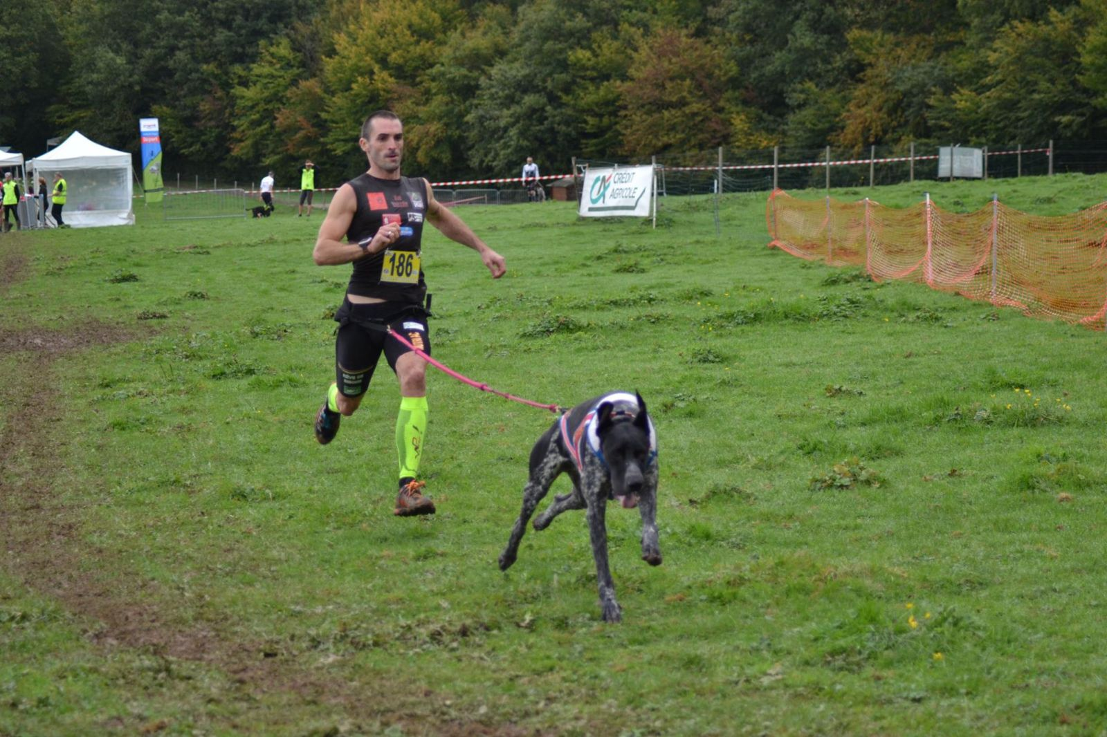 chien course canicross