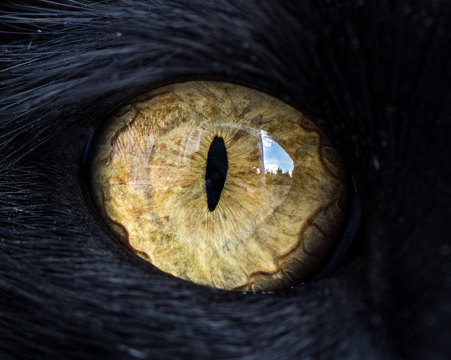 photo oeil de chat