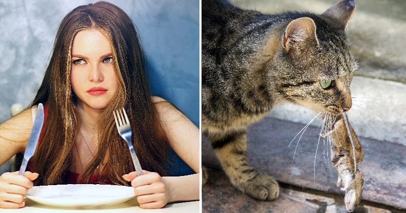 10 choses de la vie qui changent lorsqu'on adopte un chat