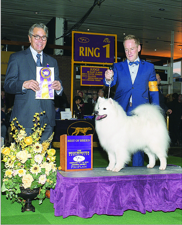 chien gagnant best of breed