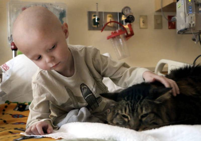 Children S Hospital Therapy Dogs