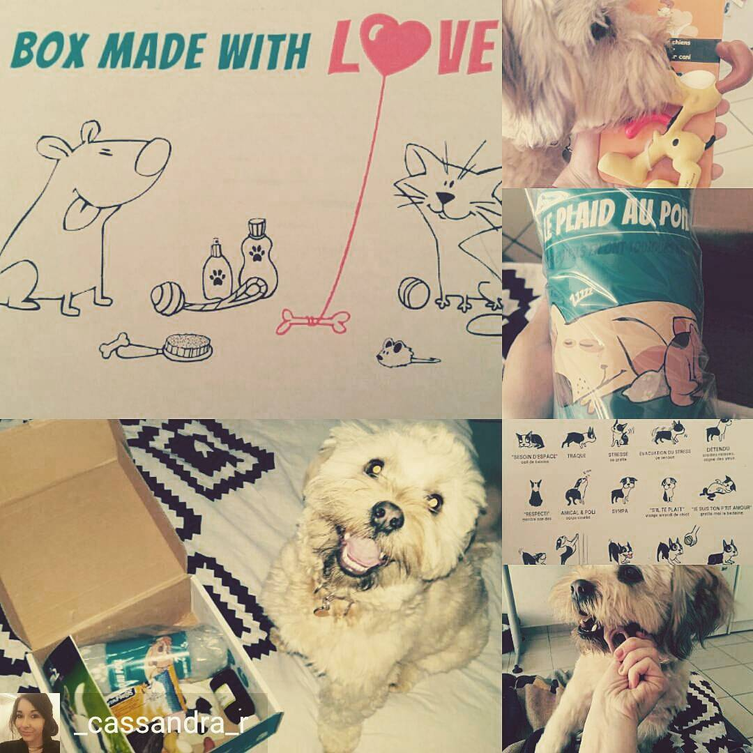 instagram wamiz box