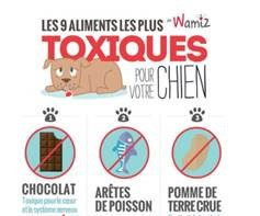 13 aliments tr s dangereux pour les chiens nourrir son chien wamiz. Black Bedroom Furniture Sets. Home Design Ideas