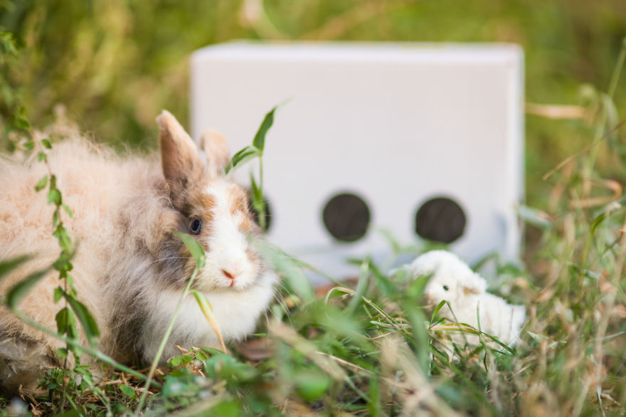 photo lapin de laboratoire