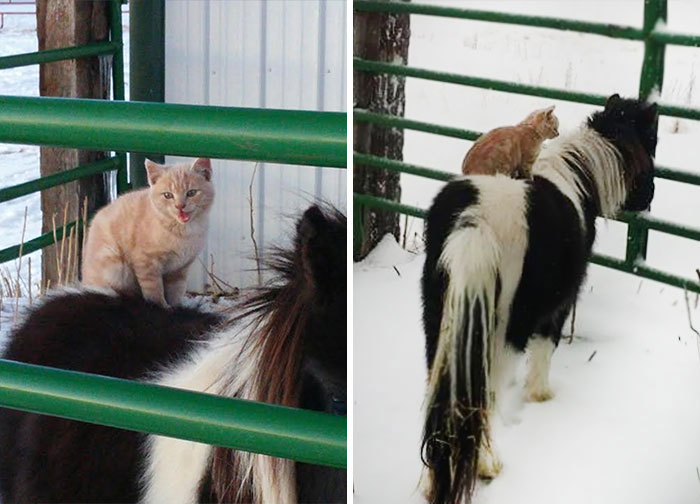 chat dos poney neige