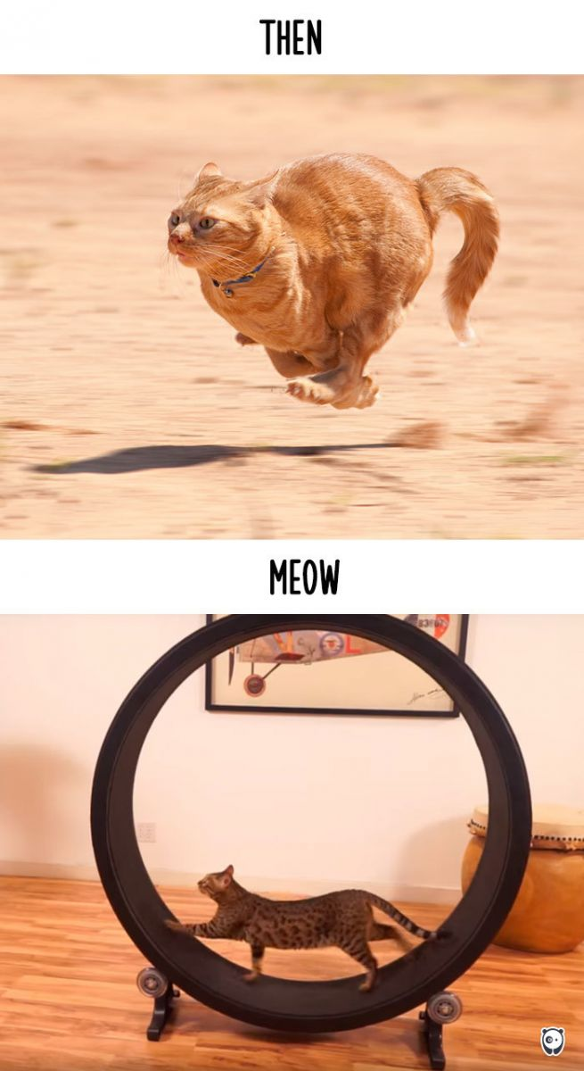 chat courir