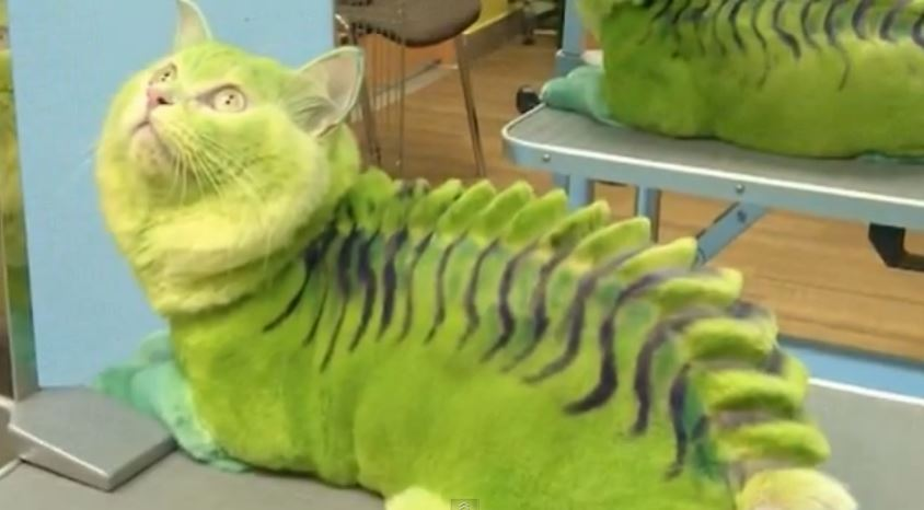 Transformer son chat en insecte ou en dragon : la nouvelle mode russe