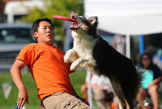 photo chien frisbee freestyle