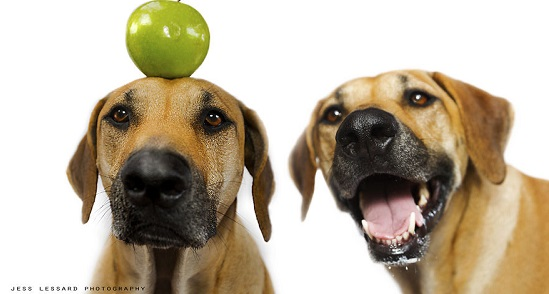 Quels fruits peut-on donner à son chien ?