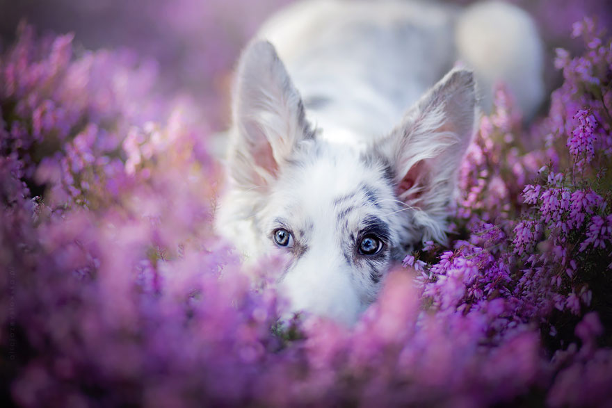 Photographe polonaise prend des chiens en photo