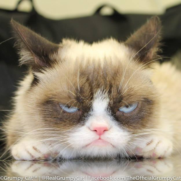 chat star, grumpy cat