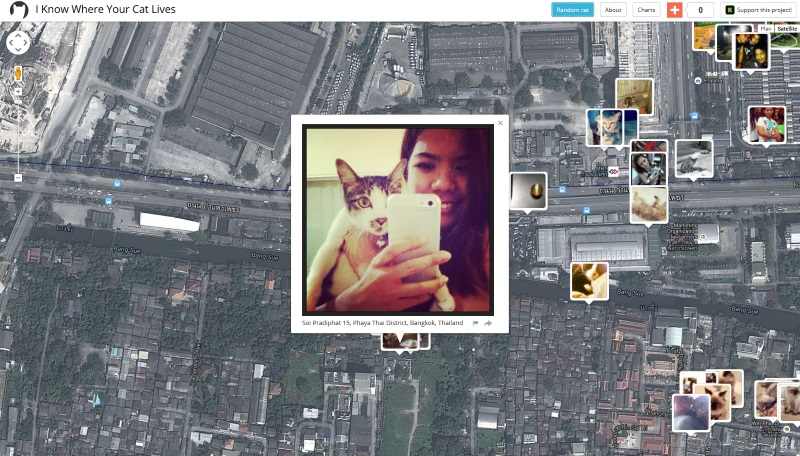 I know where your cat lives : la carte du monde des photos de chats