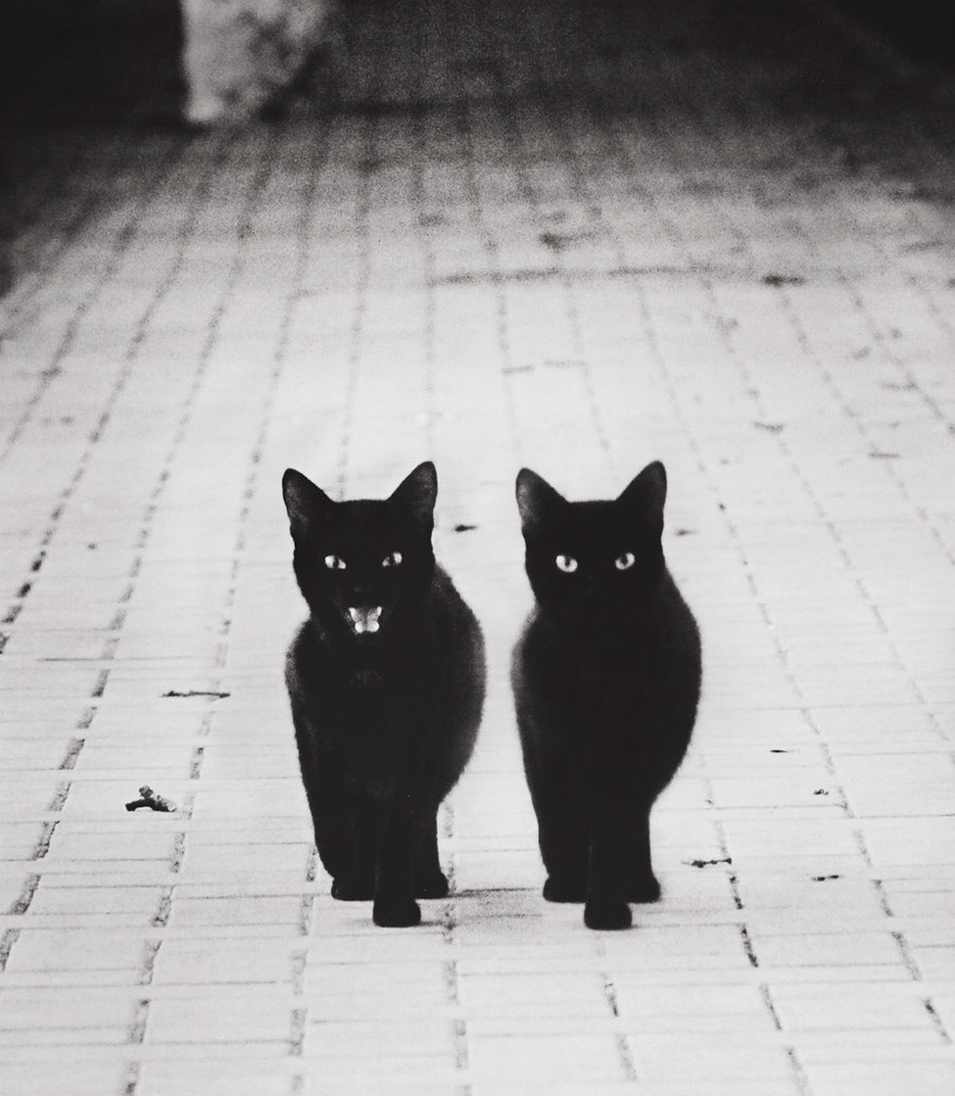 Photos de chats en noir et blanc