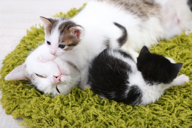 10 moments de tendresse entre un chaton et un chat adulte