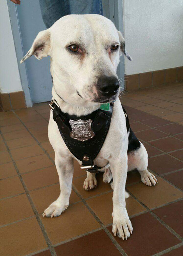 chien bayamon police