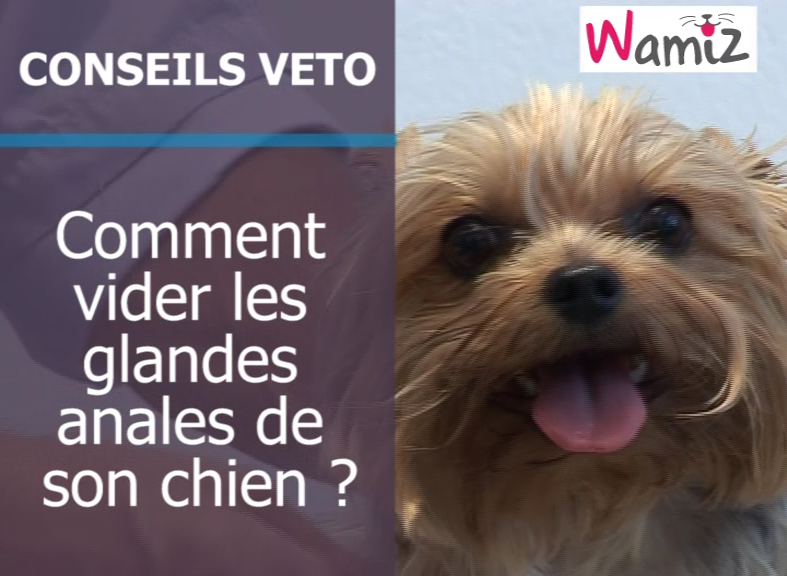 Infection Oreille Chien Traitement Maison – Ventana Blog